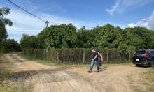 Bán đất vườn đang trồng xoài đối diện Đạo Tràng, vị trí đẹp