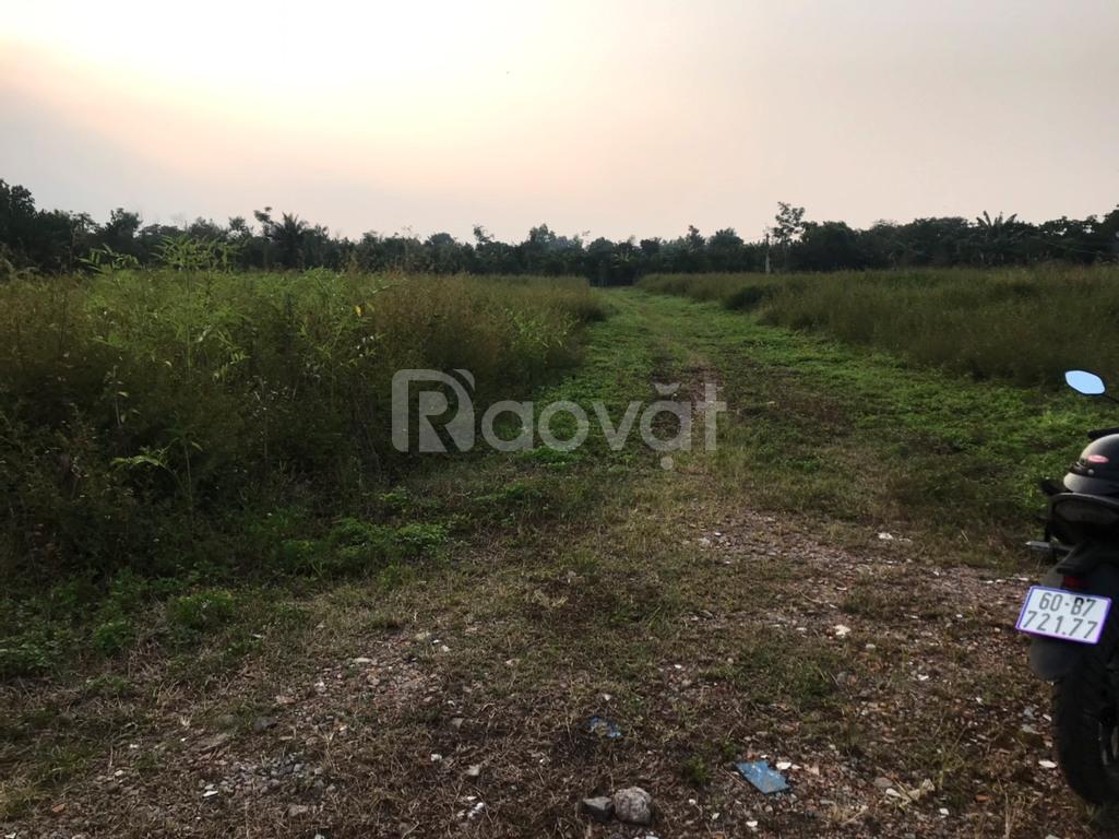 Đất vườn 1000m2 sổ riêng thành phố Long Khánh