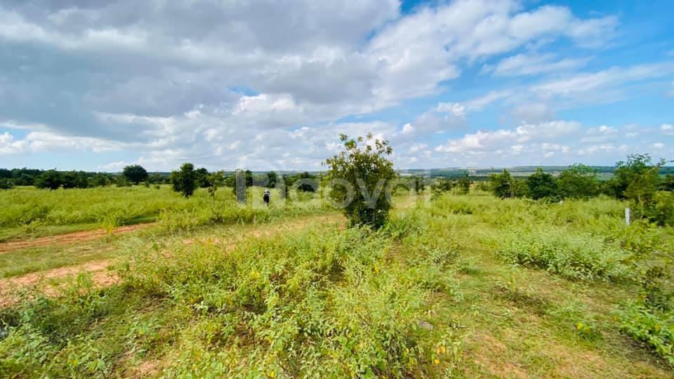 Bán lô đất vườn 10.000 gần nhánh rẻ cao tốc Phan Thiết, Vĩnh Hảo