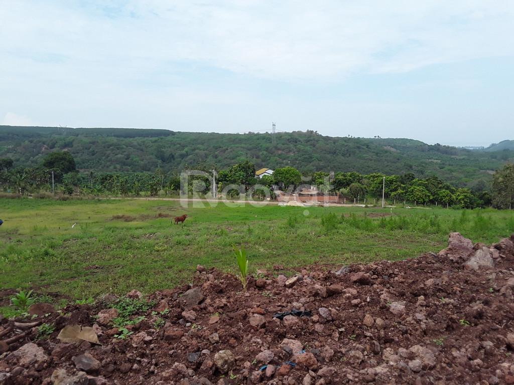 Cho thuê vườn xoài cát tại xã La Ngà, cho thuê nhà vườn tại Đồng Nai