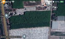 Khu dân cư Đức Phát 1, 100m2