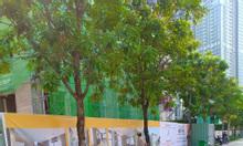 Nhà thầu xây dựng biệt thự uy tín Việt Quốc