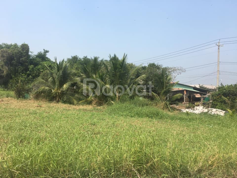 Mặt tiền đường Trần Văn Ngàn, Hướng Thọ Phú, Tân An, Long An