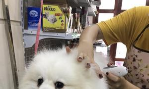 Khám chữa bệnh, tiêm phòng vacxin, ngừa dại chó mèo tận nơi ở Thủ Đức
