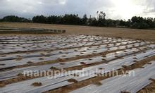 Công ty sản xuất màng phủ nông nghiệp, đại lý màng phủ nông nghiệp