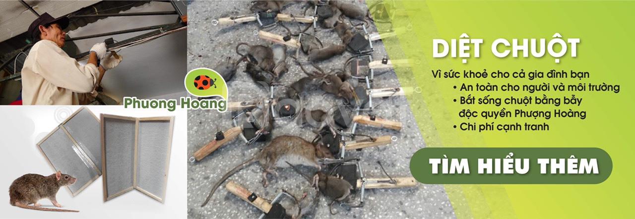 Diệt côn trùng, diệt mối, diệt ve chó giá rẻ HCM
