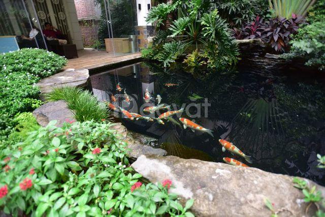 Koilover fish farm KFF, nơi thỏa mãn đam mê chơi Koi Nhật