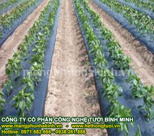 Đại lý màng phủ nông nghiệp, công ty sản xuất màng phủ nông nghiệp