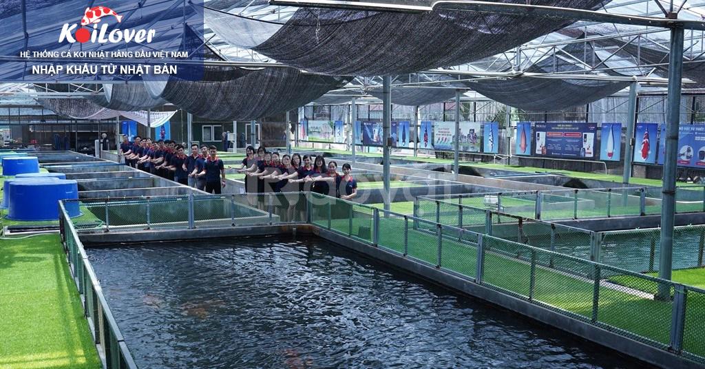 Hệ thống Koilover tư vấn kỹ thuật chăm sóc cá Koi Nhật
