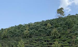 Bán đất vườn 1,3 ha tại xã Đại Lào, TP Bảo Lộc