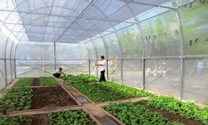 l\Lưới chắn côn trùng trồng rau sạch, thiết kế nhà lưới