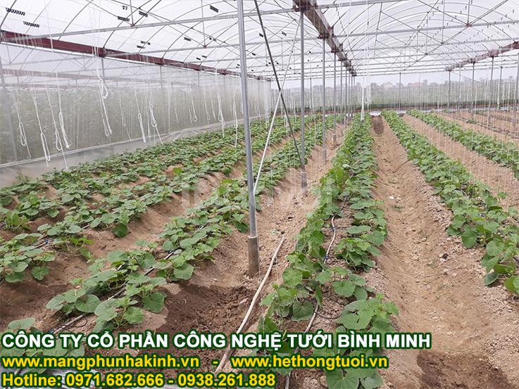 Lưới chắn côn trùng trồng rau sạch, thiết kế nhà lưới
