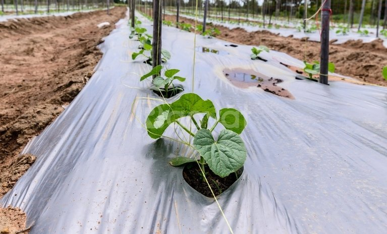 Cung cấp màng phủ nông nghiệp trong nước và quốc tế