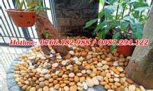Cung cấp đá sỏi vàng tự nhiên tại Hà Nội
