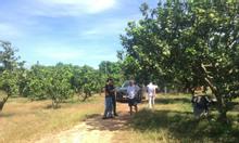 Chủ kẹt tiền nên cần bán lô đất 1000m2, SHR ở Định Quán