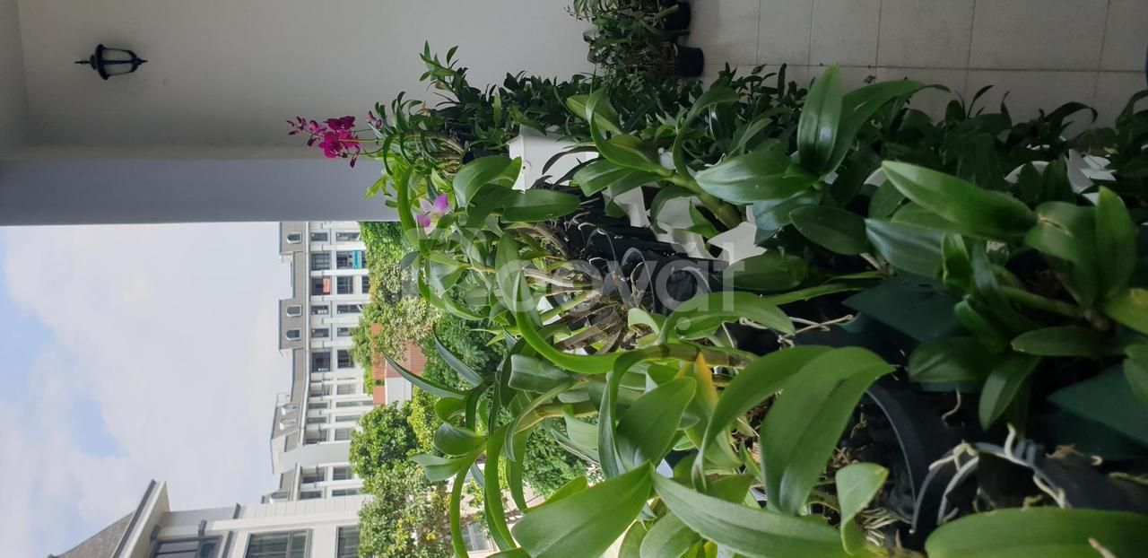 Chúng tôi tiên phong cung cấp vườn tường hoa lan