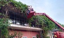 Cắt tỉa cây cảnh quan tại Bắc Ninh