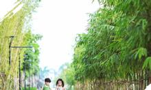 Chung cư Vinhomes Smart City