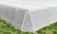 Mô hình nhà lưới trồng rau, mô hình nhà lưới giá rẻ
