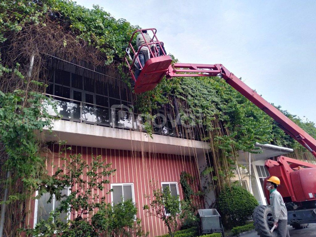Thu gọn tán cây ăn quả, cổ thụ, bóng mát tại Bắc Giang, Bắc Ninh