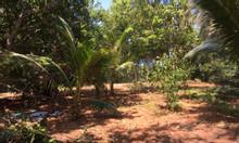 Bán đất 2 mặt tiền ngay trung tâm đảo Phú Quý