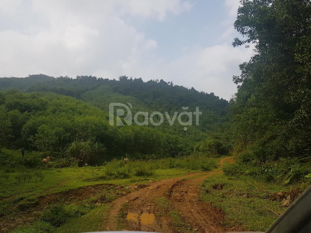 Chính chủ bán 180ha đất Kim Bôi, Hoà Bình, đầu tư sinh lời cao