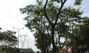 Bán gấp nhà mặt tiền Trần Văn Giàu, H.Bình Chánh