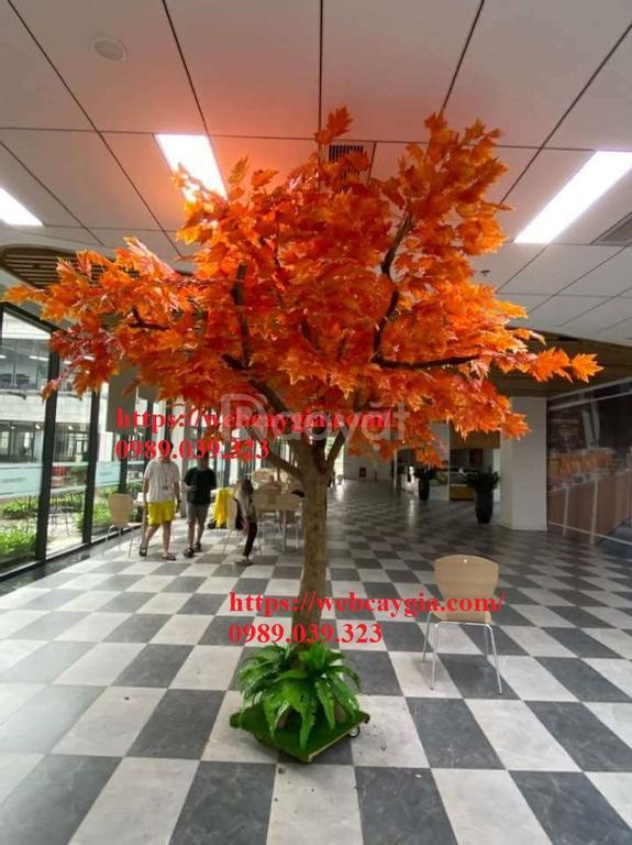 Cây phong lá đỏ giả đẹp thi công giá rẻ