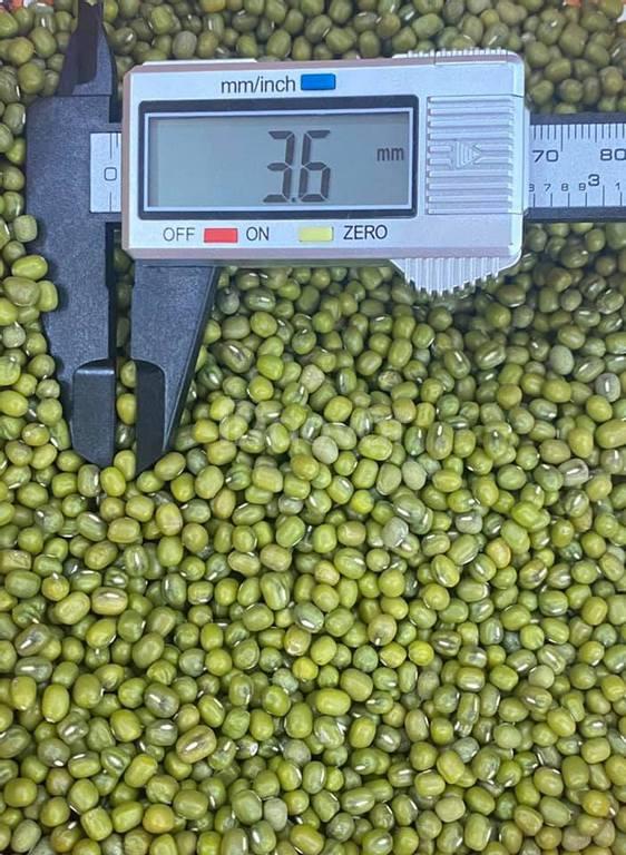Cung cấp đậu xanh làm giá các loại số lượng lớn