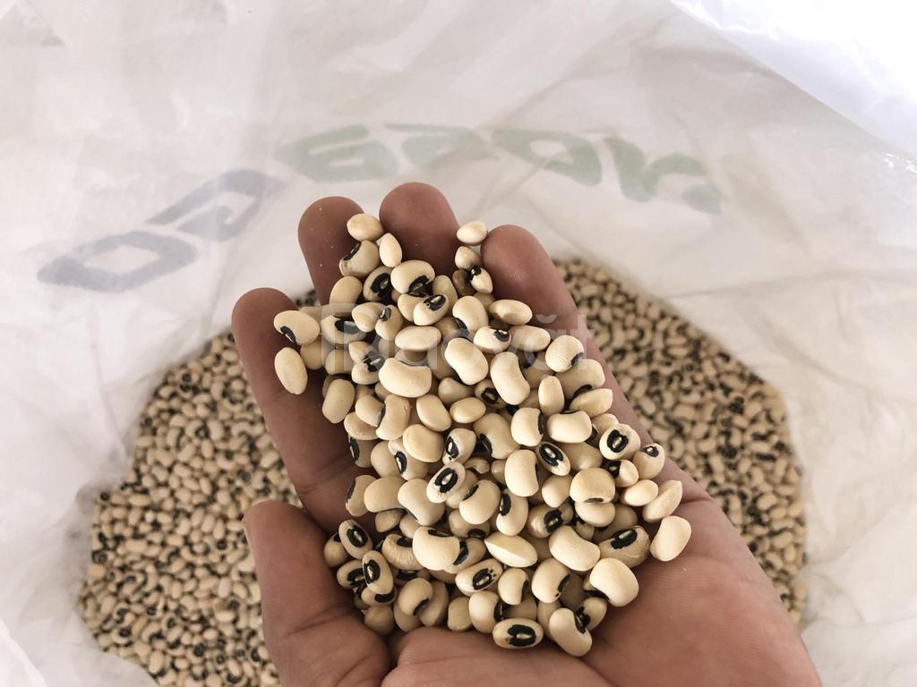 Nosago cung cấp các loại đậu hạt dành cho thương mại sản xuất