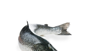 Cá hồi làm gì ngon cho bé, mua cá hồi chất lượng ở đâu