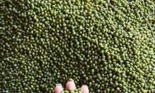 Cung cấp các loại đậu hạt dành cho thương mại, sản xuất, xuất khẩu