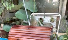 Rương gỗ, rương vintage, hamet nhận đặt hàng theo yêu cẩu sỉ và lẻ