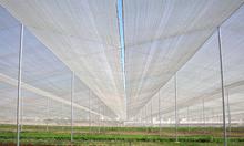 Lưới chắn côn trùng nhà kính politiv israel, lưới làm nhà lưới