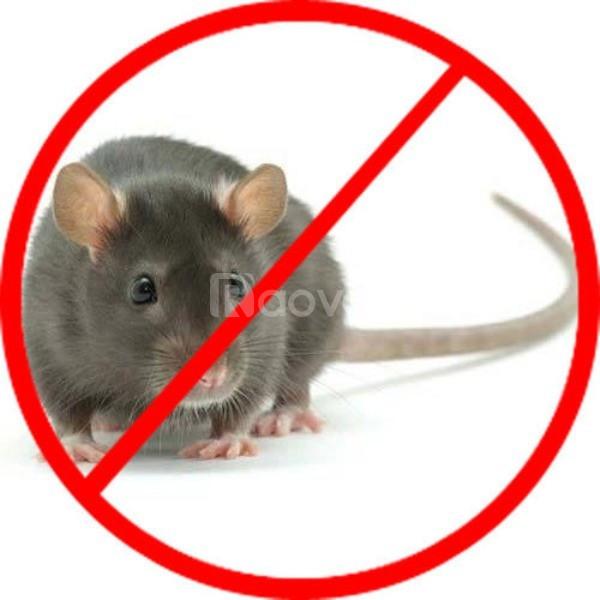 Công ty diệt chuột chuyên nghiệp tại TPHCM