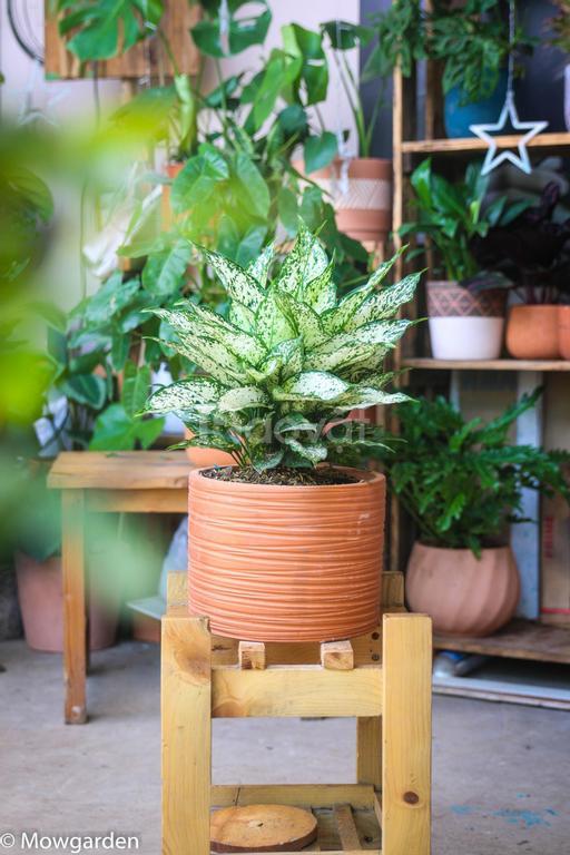 Chuyên cung cấp sỉ và lẻ cây cảnh trồng trong nhà tại Tp Hồ Chí Minh