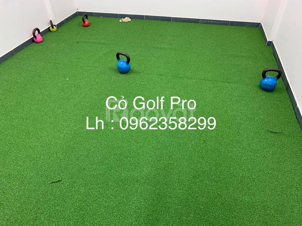 Cỏ Golf Pro