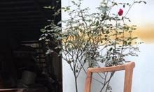 Mẫu khung ghế  caracole