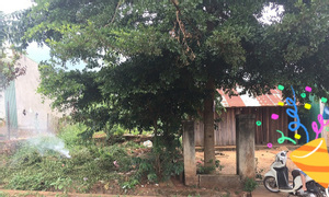 Đất xây biệt thự SHR ngang 15m (471m2), xã Đăk Lao, đường nhựa xe hơi