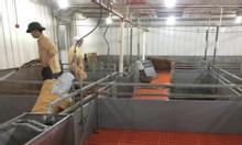 Chuồng trại heo sản xuất tại Đồng Nai