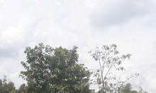 Bán gấp đất 1000 m2 Vĩnh Lôc B, Bình Chánh, TpHCM, đất đẹp vuông vắn