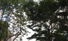 Mảnh đất vàng mặt phố Giảng Võ, Ba Đình