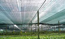 Hệ thống lưới cắt nắng tự động, lưới che nắng cho cây trồng