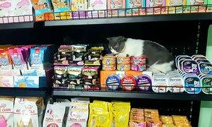 Thức ăn chó mèo Lí Lắc Pet Store, shop thú cưng quận 11