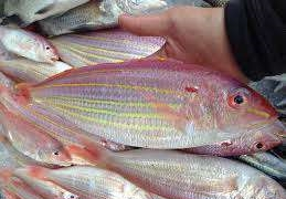Cá, thịt tươi ngon miền đất võ