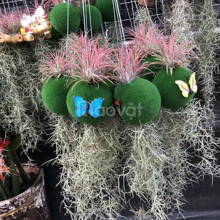 Sale sập sàn cây không khí giá rẻ