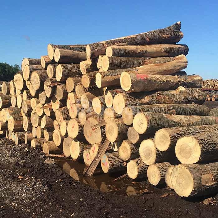 EXIMVN ủy thác XNK gỗ các loại