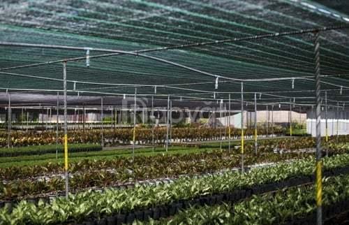Lưới che nắng, lưới cắt nắng Thái Lan