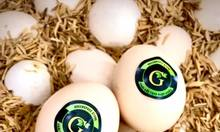 Trứng gà ác sạch GSS - 10 quả
