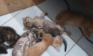 Mèo xinh, mèo đẹp cần tìm chủ